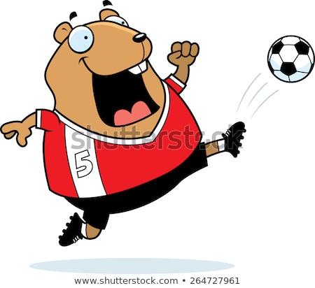 Cartoon hamster voetbal kick illustratie Stockfoto © cthoman