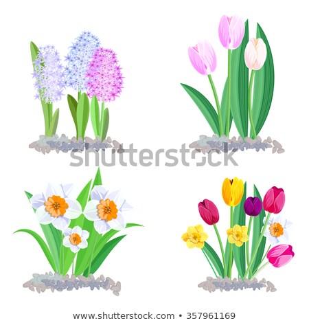 Hyacint tulpen bloemen rij lentebloemen exemplaar ruimte Stockfoto © neirfy