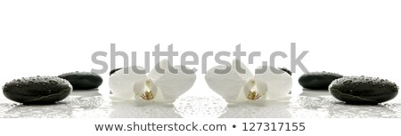 Spa concept with basalt stones and white orchid Stock photo © mythja