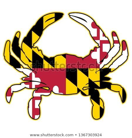 Maryland bayrak yengeç yalıtılmış keskin renkler Stok fotoğraf © jeff_hobrath