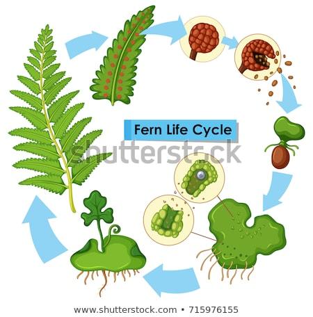 vida · ciclo · traçar · ilustração · natureza · fundo - foto stock © colematt
