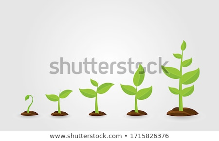 Saplings, Sprouts Growth Stages Vector Drawings Set ストックフォト © pikepicture