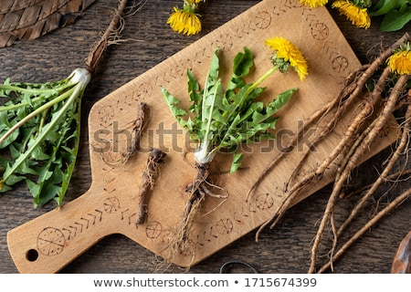 Whole dandelion plants with roots, top view Stock photo © madeleine_steinbach