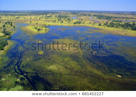 Moremi game reserve landscape, Africa wilderness Stock photo © artush