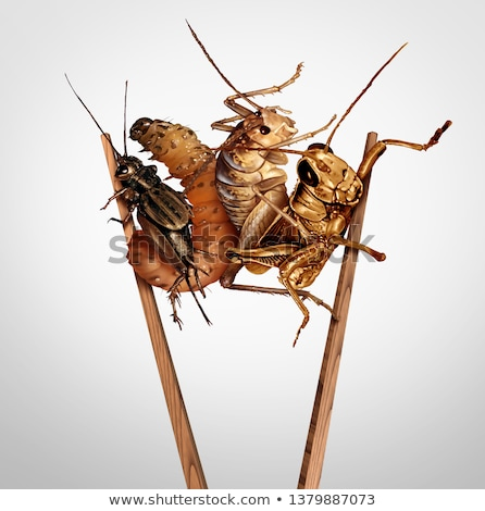 Yenilebilir haşarat yemek böcek yeme böcek Stok fotoğraf © Lightsource
