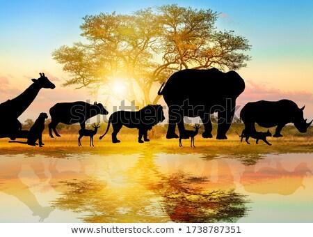 Silhouette scene with giraffe and gazelle Stock photo © colematt