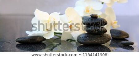 Zen siyah taşlar sıcak çiçek yeşil Stok fotoğraf © jamesS