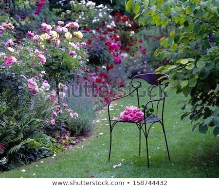 Idilli rózsa kert rózsaszín virágzó virág Stock fotó © manfredxy