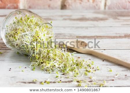 Kicsi zöld növekvő nyár élet növény Stock fotó © restyler