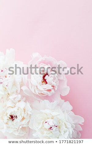 White peony flowers as floral art on pink background, wedding flatlay and luxury branding Stock photo © Anneleven