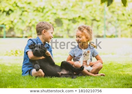 dog sitting on meadow stock photo © phbcz