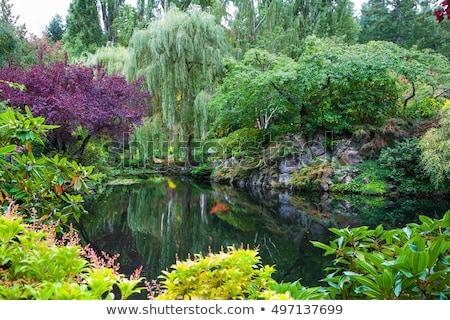 Garden of eden Stock photo © antonprado