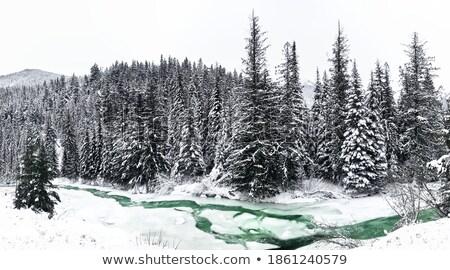 заморожены · ручей · красивой · текстуры · льда · природы - Сток-фото © inganielsen