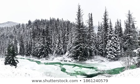 Inverno enseada pequeno congelada neve Foto stock © IngaNielsen