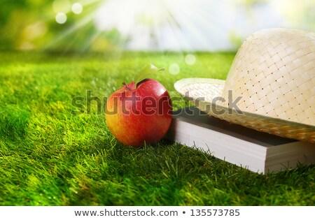 manzana · libro · sombrero · fuera · hierba - foto stock © tish1
