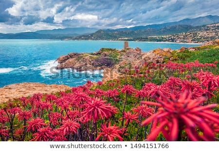 Córcega isla mar paisaje puesta de sol Foto stock © smithore