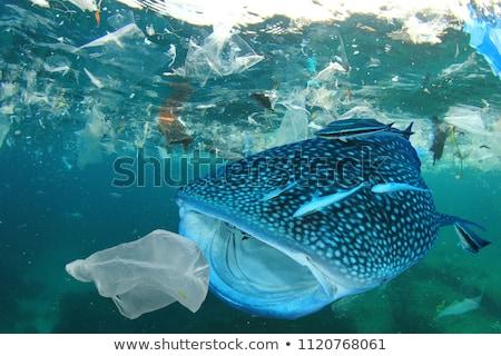 Карибы · акула · синий · океана · воды · морем - Сток-фото © mojojojofoto