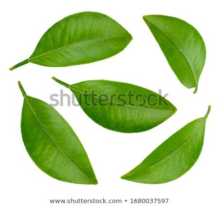 Pomelo hojas blanco jugo Foto stock © Masha