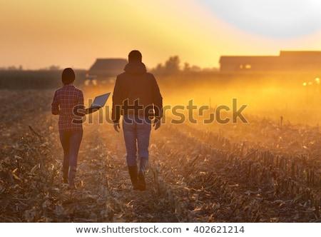 кукурузы области осень урожай облака природы Сток-фото © bigjohn36