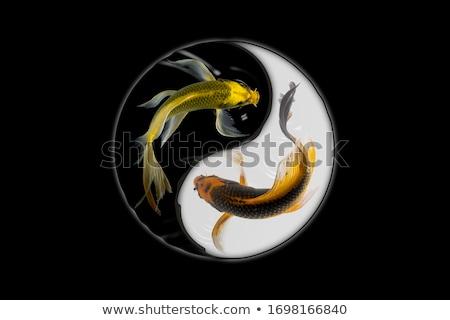 Yin Yang Underwater Stock photo © AlienCat