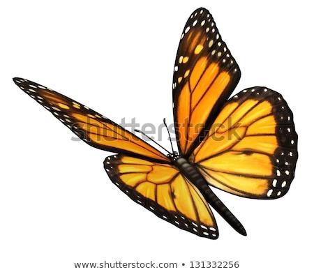 vlinder · bloem · tuin · zwarte · kleur · dier - stockfoto © lightsource
