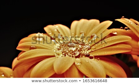 Beautiful woman with flower gerbera against white background Stock photo © rozbyshaka