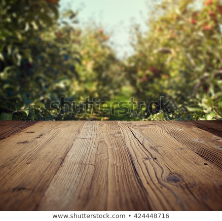 green apples on wood table stock photo © stevanovicigor