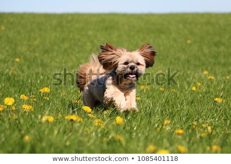 bonitinho · imagem · cachorro · olhos · branco · jovem - foto stock © ruthblack