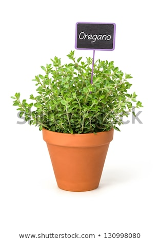Marjoram In A Clay Pot With A Wooden Label Photo stock © Zerbor