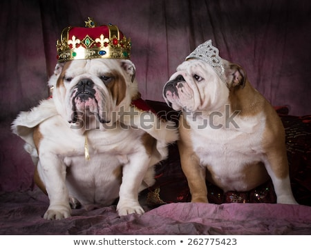dog dressed like a king stock photo © willeecole