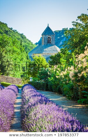 サイプレス ラベンダー畑 フランス オレンジ 土壌 ストックフォト © belahoche