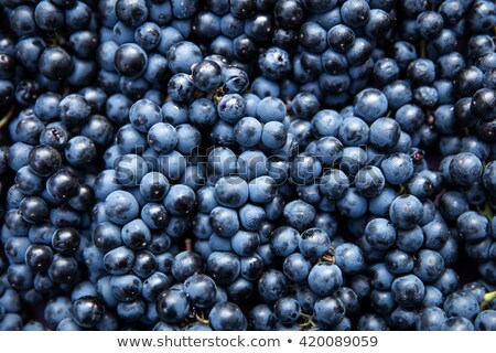 темно · синий · виноград · изолированный · белый - Сток-фото © mikko