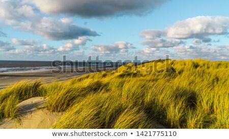 szélmalom · sziget · Hollandia · utazás - stock fotó © ivonnewierink