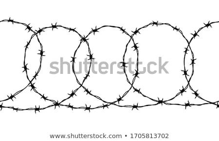 Drutu kolczastego brzytwa drutu bezpieczeństwa ochrony Zdjęcia stock © dcslim