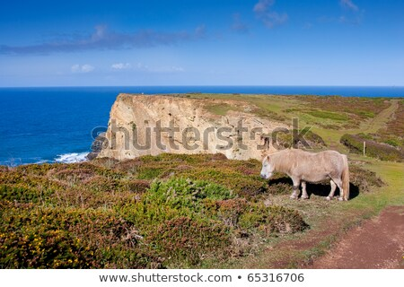 Cliff Top Landscape with Wild Grazing Pony Heather and Blue Sea  Stock photo © rekemp