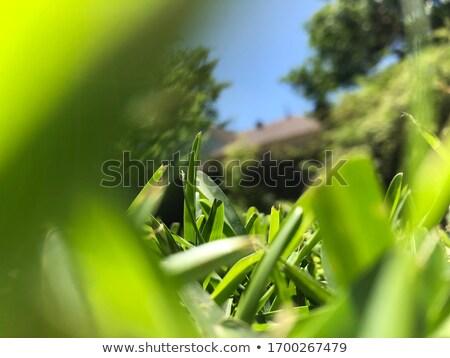 саду зеленая трава газона макроса перспективы подробность Сток-фото © lunamarina