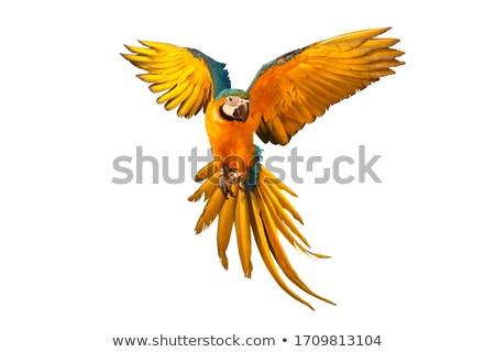 Színes kék papagáj izolált fehér madár Stock fotó © vlad_star