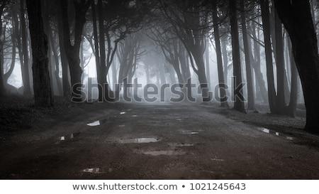 út · ködös · ősz · nap · fa · erdő - stock fotó © digifoodstock