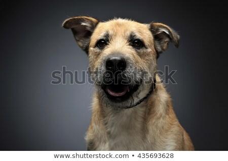 marrom · cor · cabelo · misto · cão - foto stock © vauvau