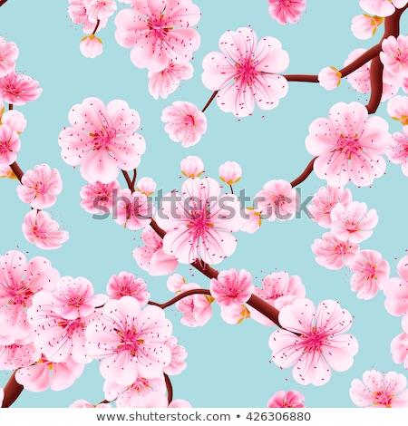 Stock fotó: Végtelen · minta · sakura · eps · 10 · vektor · akta