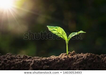impianto · crescita · suolo · inizio · natura · care - foto d'archivio © imaster
