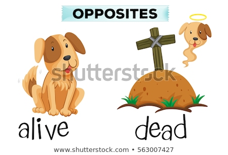 Opposite word for alive and dead Stock photo © bluering