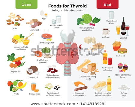 thyroid gland anatomy stock photo © tefi