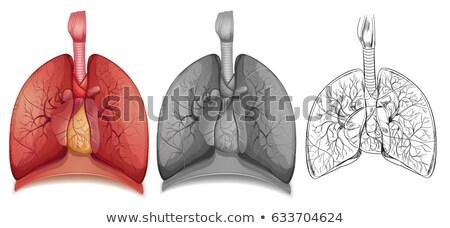 Karakter emberi orvosi egészség művészet fehér Stock fotó © bluering