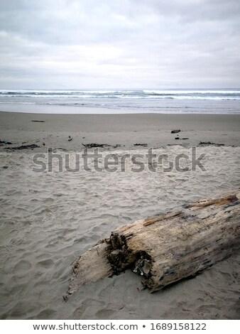Uszadék tengerpart felhős égbolt hazugságok homokos tengerpart Stock fotó © brianguest