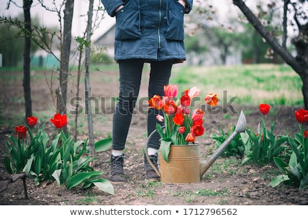 Spring Flowers and Watering Can Stock photo © frannyanne