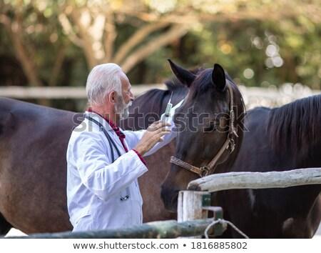 senior caucasian veterinarian examining pets stock photo © rastudio