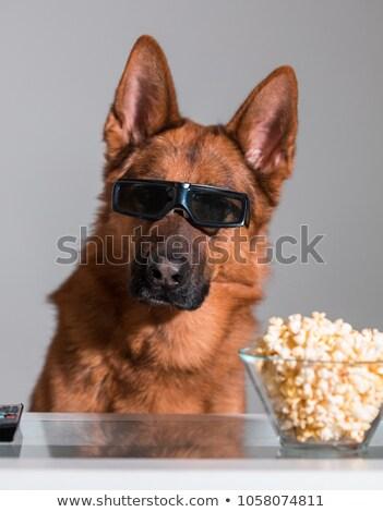 犬 映画 ポップコーン サングラス 3次元の図 3D ストックフォト © adrenalina