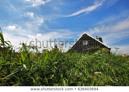 spring landscape with an old wooden house stock photo © kotenko