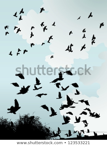 Pigeon silhouettes fil amour corps design Photo stock © gladiolus
